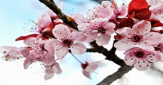 http://stc.bindo.vn//files/cung-bindo-tim-hieu-phong-tuc-cua-ba-mien-ngay-tet-y-nghia-.jpg