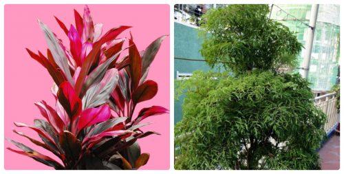 http://stc.bindo.vn/uploads/news/4-cach-chua-benh-a-sung-theo-dan-gian-hieu-qua-nhat3.jpg
