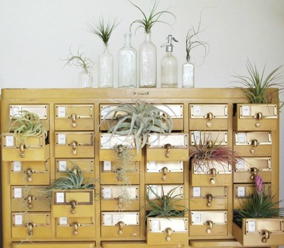 7 ý tưởng trồng cây xanh cực chất trong nhà