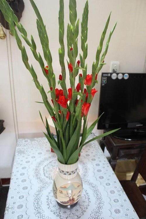Cách chọn hoa đẹp trang trí phòng khách ngày Tết