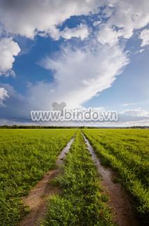 Tranh  cảnh nông thôn với đường bùn.