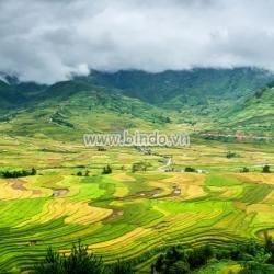Tranh cảnh ruộng bậc thang ở Mù Cang Chải, tỉnh Yên Bái tại Việt Nam.