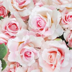 Tranh hoa hồng 6
