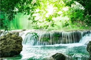 Tranh thác rừng sâu ở Thái Lan