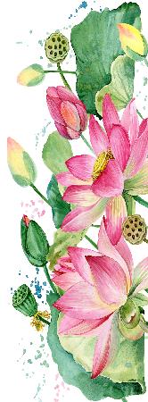 Tranh vẽ hoa sen 4