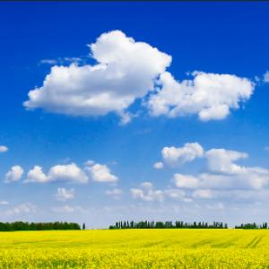 Tranh dán tường đồng cỏ và bầu trời