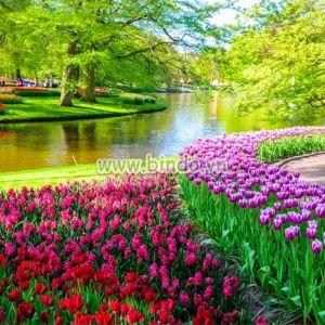 Tranh cảnh vườn hoa Tulip