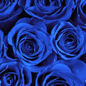 Tranh hoa hồng xanh dương