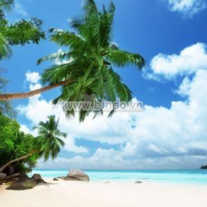 Tranh bãi biển trên đảo Mahe ở Seychelles