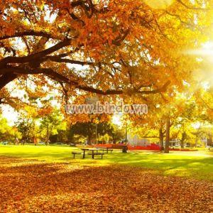 Tranh cảnh cây mùa thu với chùm ánh nắng mặt trời