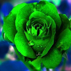 Tranh hoa hồng xanh lá