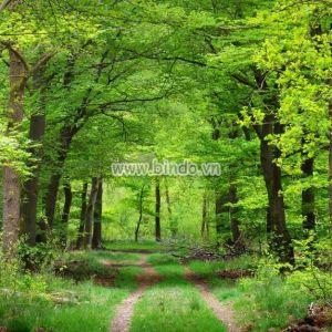Khu rừng mùa xuân ở hà lan