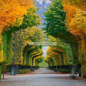 Khu vườn mùa thu Vienna nước Úc
