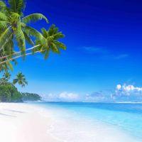 Tranh cảnh biển Thiên đường nhiệt đới.