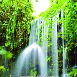 Tranh cảnh thác nước và đôi thiên nga