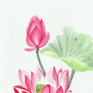 Tranh vẽ hoa sen 1