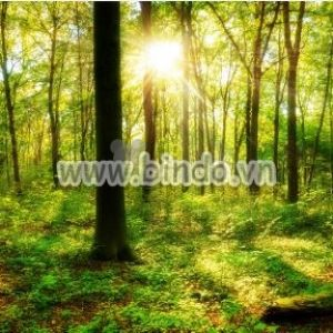 Tranh panorama rừng già