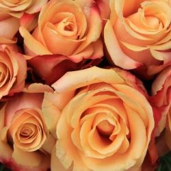 Tranh hoa hồng 4
