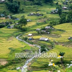 Tranh cảnh cánh đồng lúa với sông ở làng Tavan tại Sapa, Việt Nam