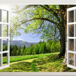 Decal dán tường Tranh cửa sổ và cây to